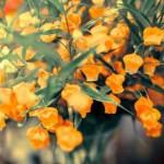 敬老の日のプレゼントは花がおすすめ!花言葉や色で選ぶポイントは?