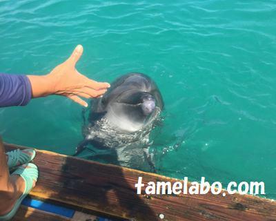 ドルフィンファンタジー石垣島 イルカ