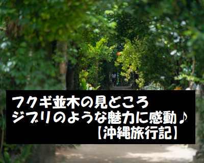 フクギ並木の見どころ ジブリのような魅力に感動してきた【沖縄旅行記】