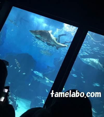美ら海水族館 水槽
