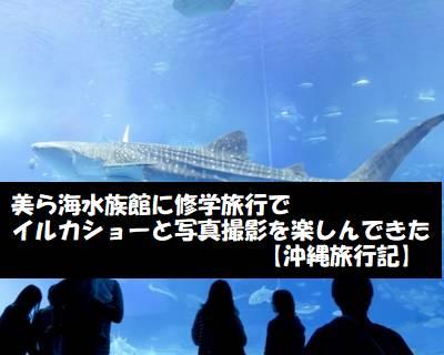 美ら海水族館に修学旅行でイルカショーと写真撮影を楽しんできた【沖縄旅行記】