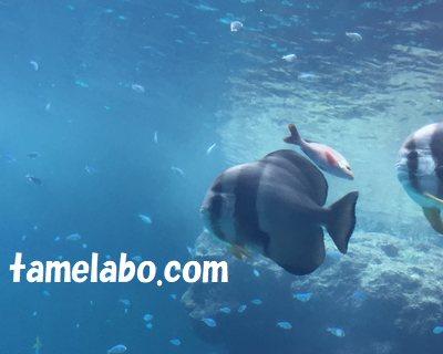 美ら海水族館 熱帯魚